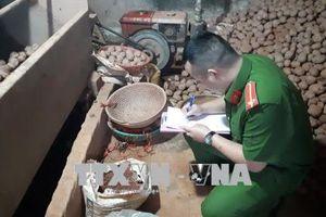 Trộn đất đỏ để 'đánh lận' khoai tây Trung Quốc thành khoai tây Đà Lạt
