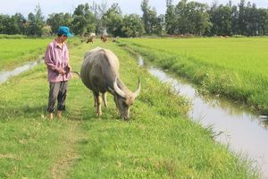 Thông tin mới vụ thu phí trâu bò ăn cỏ ở Quảng Bình