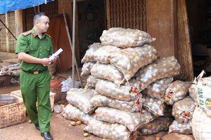 4 tấn khoai tây Trung Quốc giả hàng Đà Lạt chuẩn bị xuất đi TP.HCM