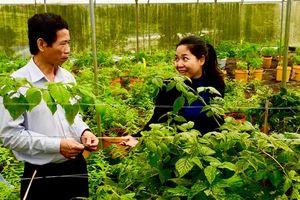Ngưỡng mộ người phụ nữ sở hữu 5 nông trại hữu cơ như hệ sinh thái 'cổ xưa'