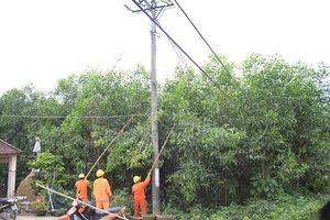 Vi phạm hành lang an toàn lưới điện gia tăng tại miền Trung