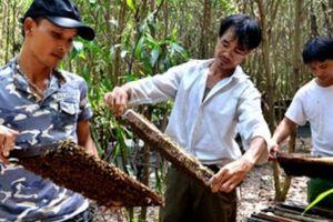 Hết 'hot', giá mật ong sụt giảm, nhiều hộ bỏ nghề vì thua lỗ