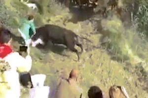 Bò tót lao vào tấn công khán giả trong lễ hội bò rượt