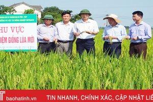 Hà Tĩnh phấn đấu gieo trồng hơn 12.000 ha cây trồng vụ đông