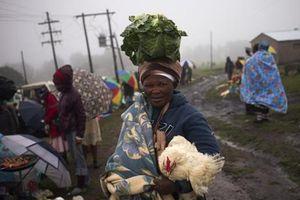 Hiệp hội Gia cầm Nam Phi đề nghị biện pháp trả đũa thương mại Mỹ