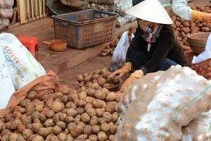 Liên tiếp phát hiện khoai tây Trung Quốc giả Đà Lạt bán đại hạ giá