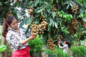 Bảo tồn cây ăn quả đặc sản