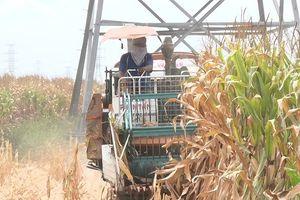 Liên kết chuỗi trong nông nghiệp giúp nâng chất xây dựng nông thôn mới