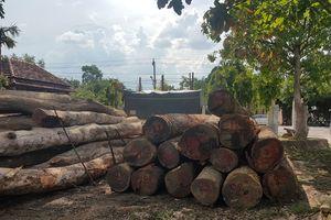 Hạt trưởng kiểm lâm tiếp tay cho trùm gỗ lậu Phượng 'râu' bị bắt khẩn cấp