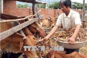 Cần thêm động lực phát triển vùng dân tộc thiểu số và miền núi Ninh Thuận