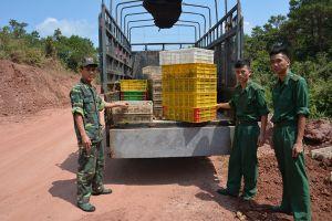 Thu giữ, tiêu hủy 20.000 con gà không rõ nguồn gốc xuất xứ