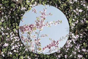 Ngỡ ngàng trước vẻ đẹp của tự nhiên qua tấm gương tròn