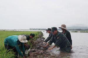 Bộ đội Biên phòng tỉnh An Giang giúp dân thu hoạch lúa