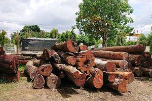 Vụ phá đường dây gỗ lậu của Phượng 'râu': Chi cục trưởng kiểm lâm giao nộp 8m3 gỗ