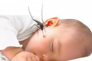 Triệu chứng bé bị sốt xuất huyết