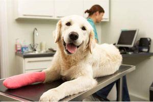 Bảo hiểm thú cưng phát triển nở rộ ở Mỹ