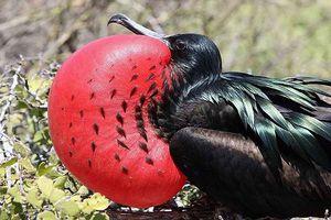 Phát hiện loài chim mới bay cao 4 km liên tục 2 tháng không nghỉ