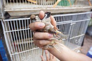 Tiếng kêu xé lòng của những con chim chờ phóng sinh ở Hà Nội tháng cô hồn