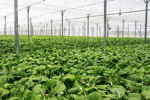 33/63 tỉnh, thành phố có mô hình sản xuất nông nghiệp hữu cơ