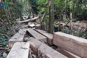 Lâm tặc chống trả, hành hung kiểm lâm Bình Định để tẩu tán gỗ lậu