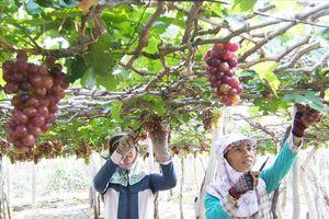 Đi giữa những vùng phát triển du lịch vườn ở Ninh Thuận