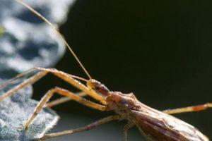Chuyên gia cảnh báo lạnh gáy về 'bọ hôn' lây nhiễm 300.000 người
