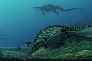 Phát hiện tổ tiên loài rùa