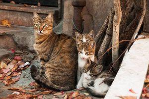 Clip: Những điểm đến dành cho người yêu mèo 01 - Thành phố Istanbul