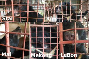 Một trang trại tại Tiền Giang nuôi 5 con gấu ngựa trong 20 năm qua