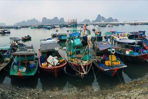 Cận cảnh chợ cá Cẩm Phả tấp nập người bán kẻ mua buổi bình minh
