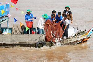 Thả trên 7,6 tấn cá giống quý hiếm về với thiên nhiên