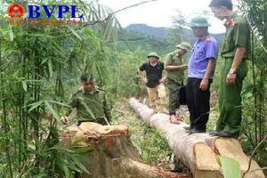 Nghệ An: Triệt phá nhóm lâm tặc phá rừng quy mô 'khủng'