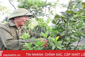 Lão nông 80 tuổi vẫn 'say' làm vườn mẫu
