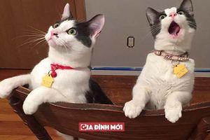 14 chú mèo với phản ứng kỳ lạ khi được nếm trải cảm giác của 'lần đầu tiên'