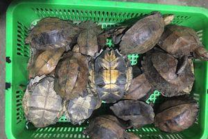Khởi tố người phụ nữ tàng trữ động vật hoang dã ở Quảng Nam