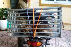 Buông lỏng quản lý nuôi chó: Hiểm họa khôn lường