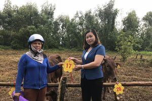 Huyện Thạch Thất trao tặng bò sinh sản cho 27 hộ nghèo