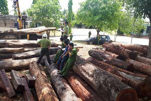Khởi tố Hạt trưởng kiểm lâm tiếp tay trùm gỗ lậu Phượng 'râu'