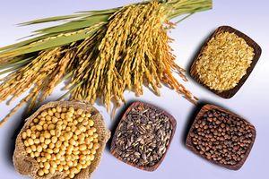 Thị trường nông sản ngày 28/8: Giá ca cao NY đã giảm từ mức cao 6 tuần; Giá lúa mì Mỹ đã giảm liên tiếp 7 phiên