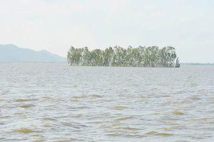 Nước lũ dâng cao gây thiệt hại hàng trăm ha lúa