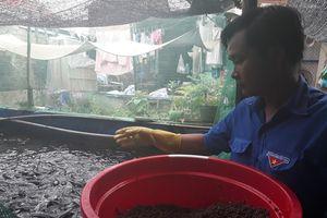 Hiệu quả nuôi cá lóc lót bạt