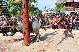 Bộ VHTTDL lên tiếng vụ thu tiền tổ chức lễ hội đâm trâu: Yêu cầu xác minh và xử lý vi phạm