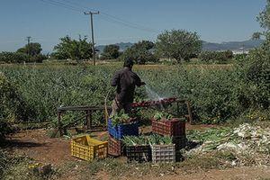Góc khuất cuộc sống người nhập cư Pakistan tại Hy Lạp