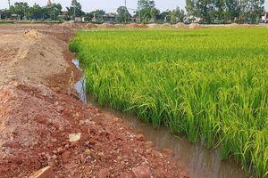 Bài 5: Lộ kế hoạch 'thôn tính' đất lúa làm dự án