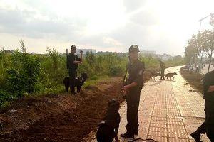 Hơn 30 chú chó nghiệp vụ 'săn' kẻ cướp trong rừng lau sậy