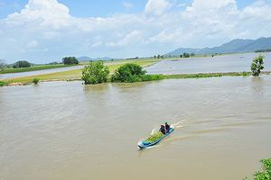 Vỡ đê bao ở An Giang khiến hơn trăm ha lúa chìm trong nước
