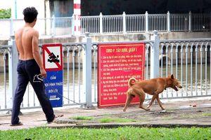 TP.HCM: Phớt lờ cả triệu đồng tiền phạt, người dân vô tư thả chó chạy rông