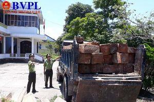 Vụ tàn phá rừng phòng hộ Quảng Trị: Đã khởi tố vụ án theo yêu cầu của Viện kiểm sát