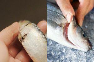 Mẹo chọn cá tươi ngon không phải ai cũng biết
