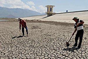 Tưới nước thông minh, tiết kiệm bằng hệ thống cảm biến độ ẩm cho cây trồng ở vùng hạn hán